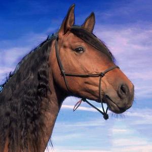 paarden-stoervoer-300x300